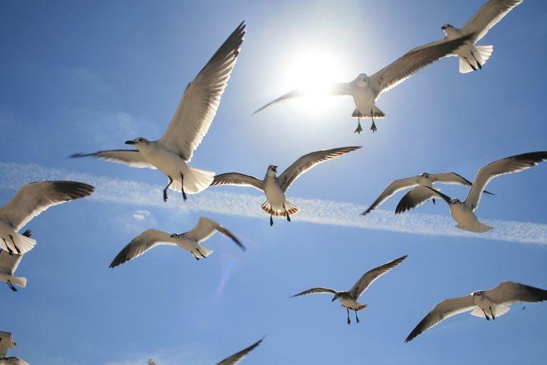 una-pesada-carga-aves-volando-de-matagalpa
