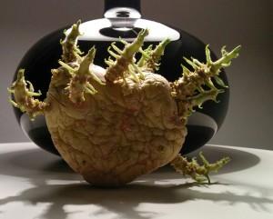 Corazón alien patata