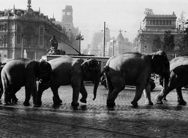 Madrid antiguo - elefantes en cibeles