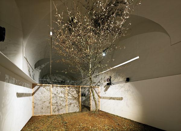 Árbol de la Fageda d'en Jordà que Job Ramos metió en su exposición