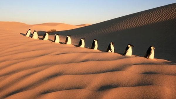 Pingüinos en el desierto